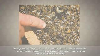урок пчеловодство 2 Тренер Дуйшеналиев Ж.Б.