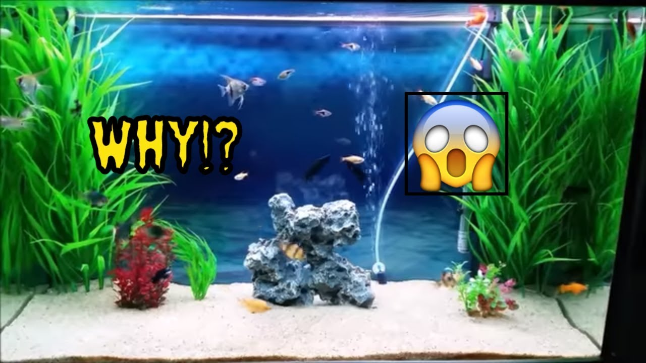 Top reasons why aquarium fish die - fish keeping common mistakes which  cause fish to die