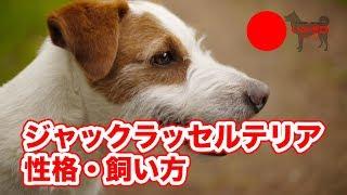 ジャックラッセルテリアって、どんな犬なの?を話しています。 さらに深...