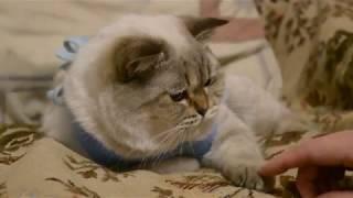 как выглядит и чувствует себя кошка после стерилизации.