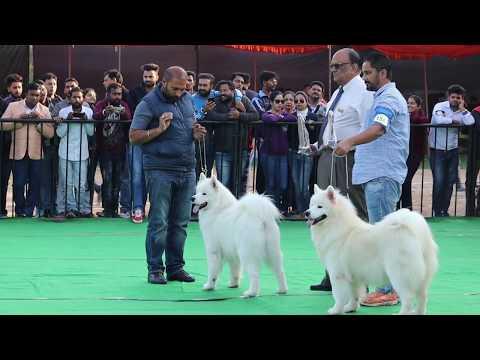 Dog Show In India || Siberian Husky || Doberman || Scoobers
