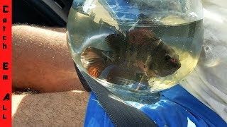Aquarium CATCHING Pet Exotic Fish