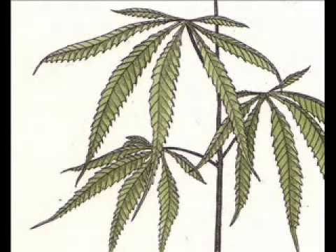 Trialogue #17  Cannabis Trialogue Terence McKenna, R  Sheldrake, R  Abraham FULL