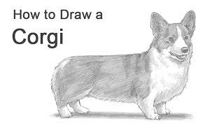 How to Draw a Dog (Welsh Corgi)