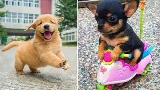Baby Dogs  Cute and Funny Dog Videos Compilation #6 | 30 Minutes of Funny Puppy Videos 2021