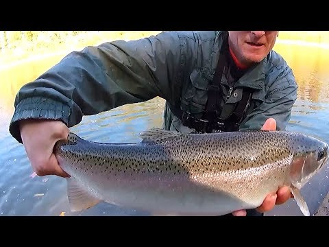 Erie Steelhead: Fishing The Catt (Cattaraugus Creek)