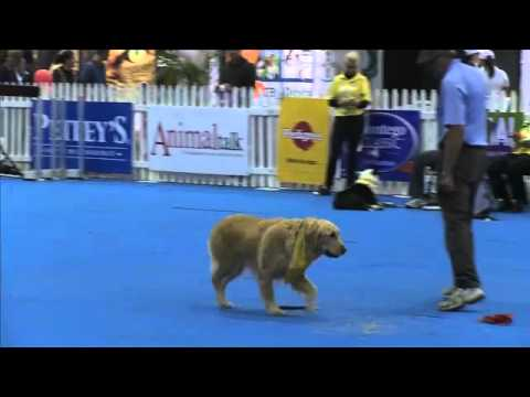Canine Survivor, Episode 1 Task 3: Scenting, WODAC, Johannesburg, South Africa