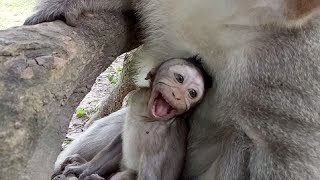 Baby Monkey Cry So So Loudly  Cos Mum ST461 Mono Monkey