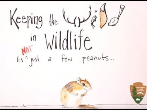 Keeping the Wild in Wildlife: It's not just a few peanuts