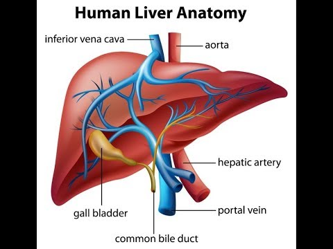 Amazing detox cleanse your liver and burn fat overnight youtube amazing detox cleanse your liver and burn fat overnight ccuart Gallery