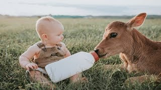 Baby Feeding and Playing with Cow | Funny Baby and Animal Videos