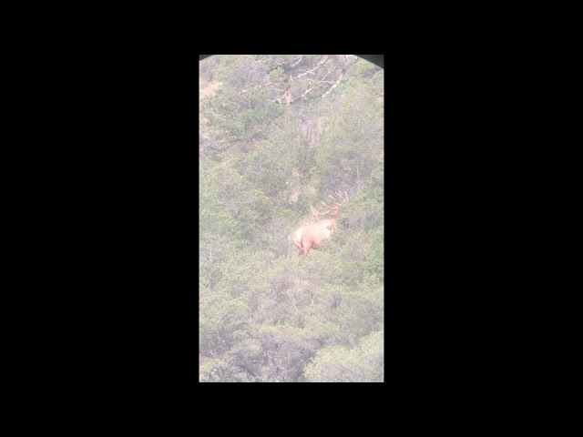Video Aug 19, 8 03 03 AM - Elk