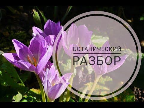 Осенний крокус или Безвременник. Разбор цветка.Видеоразбор цветов от Елены Гуреевой.