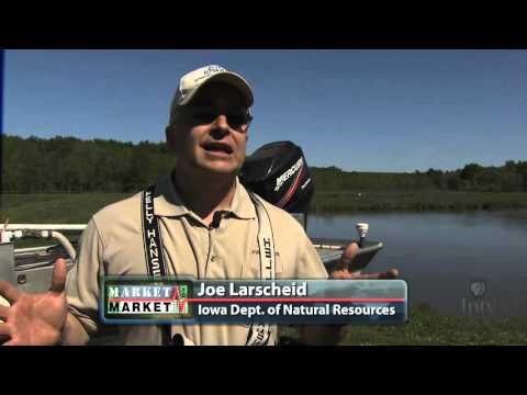 Asian Carp Invade U.S. Rivers