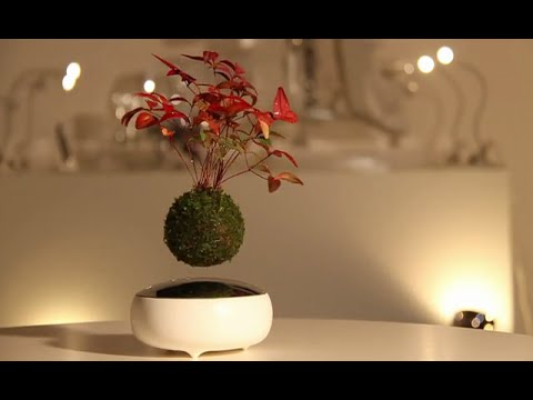 Air Bonsai A Floating Bonsai Tree Youtube