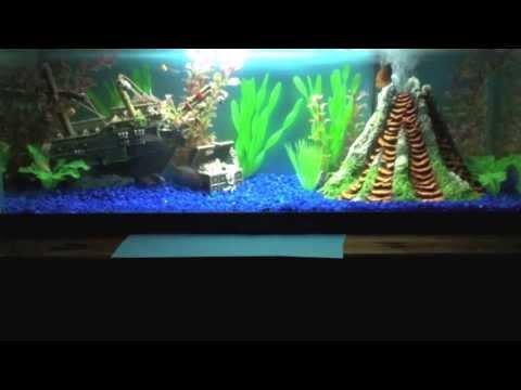 The Real Nemo Aquarium - YouTube