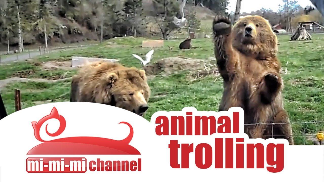 funny animals troll  pilation best animal jokes and pranks   youtube