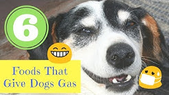 6 Foods That Give Dogs Gas