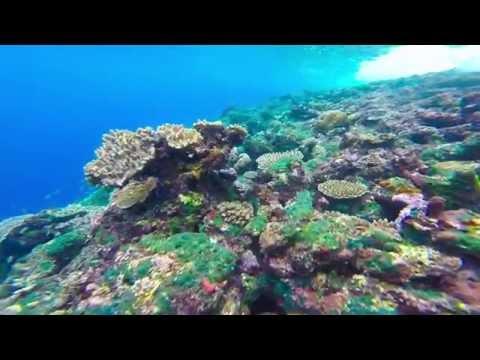 Mavo Eco Lodge - Ramata Island
