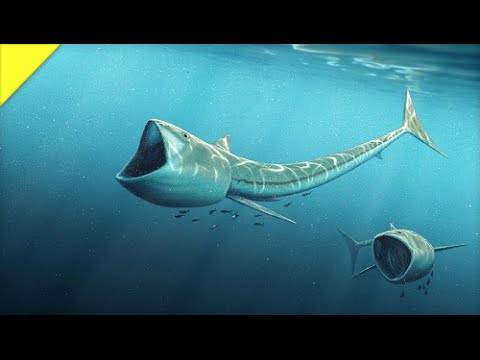 Big-Mouthed Fish from the Cretaceous | Prehistoric News
