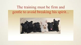 Scottish Terrier Puppy Training