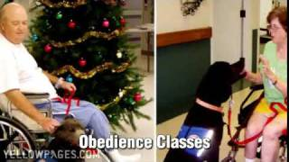 All Dogs & Company Springfield Mo Obedience Schools