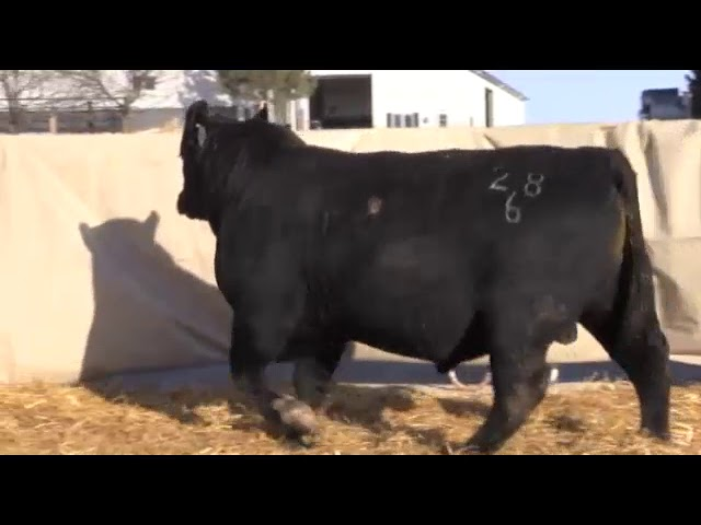 Marcy Cattle Company Lot 13