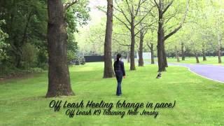 Klee Kai Off Leash Obedience