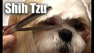 Elegant Shih-Tzu PET TRIM