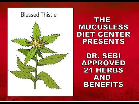 21-herbs---detailed-information-on-dr.-sebi-approved-herbs