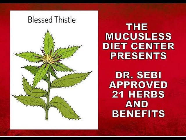 21 Herbs - Detailed Information on Dr  Sebi Approved Herbs