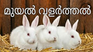 Rabbit Farm In Kerala  (malappuram ) Mobile : +91 812 900 4001