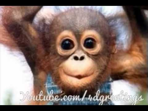 Adorable Little Monkey Singing Happy Birthday Song