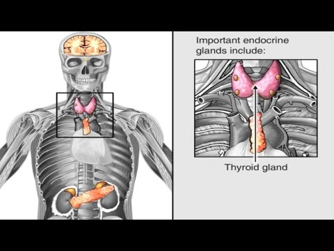 How Hormones Work In The Body Animation - Endocrine System Anatomy & Physiology Video - Hypothalamus