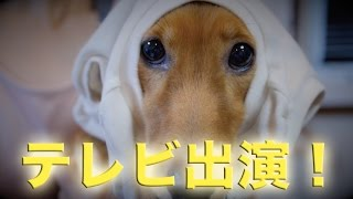 ウチのわんこがテレビに出ます(*´∀`*) TBS「生き物にサンキュー」 http...