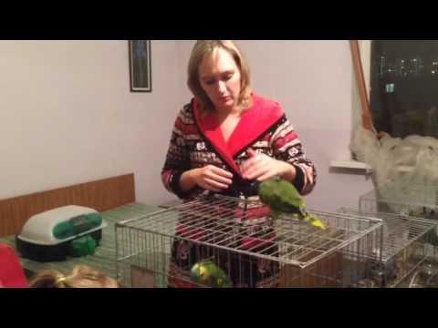 Питомник продает крупные виды попугаев собственного разведения (выкормыши)