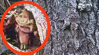 5 Criaturas Míticas REAIS Capturadas por Câmera