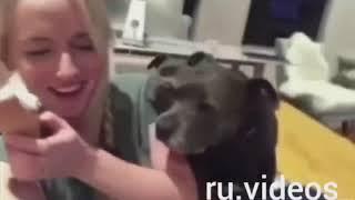 КОТЫ ПРИКОЛЫ 2018 ЛУЧШИЕ ПРИКОЛЫ С ЖИВОТНЫМИ ПРОСТО)))))ЧУМА