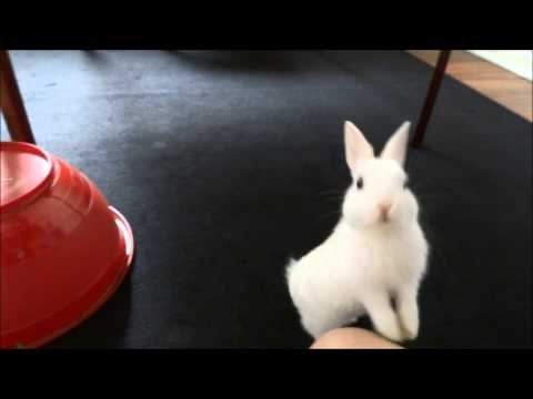 How To Train A Bunny