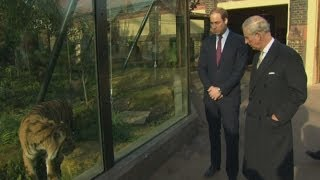 Prince William and Charles visit tigers at London Zoo