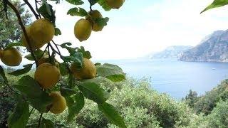 Fettuccine Al Limone, Positano