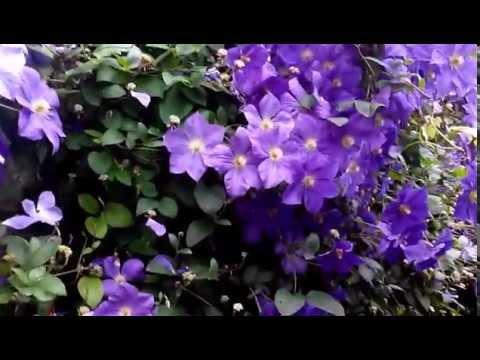 мини кино цветы: