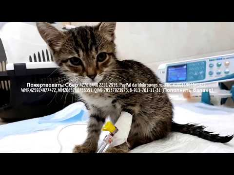 МТС Банк ПАО — Хабаровск — контакты, телефон, режим работы