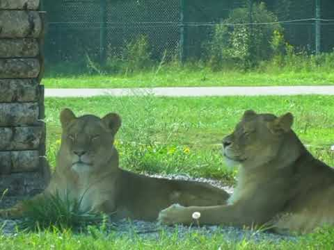 African Lion Safari (2015)