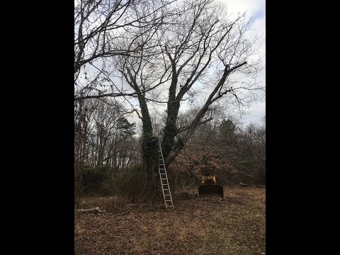 Clearing Trees and Brush with Cat 941 Traxcavator