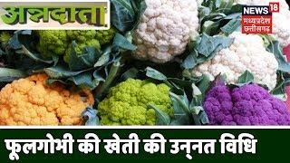 Annnadata   Cauliflower Cultivation   मुनाफे के लिए करें फूल गोभी की खेती   News18 MP-Chhattisgarh