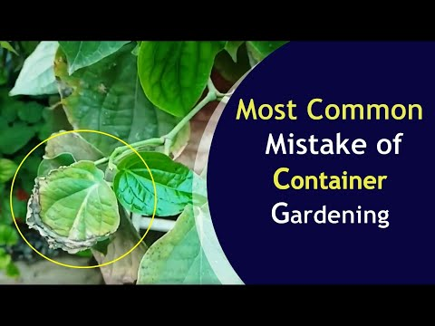 1 biggest gardening mistake
