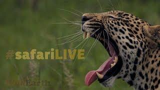 safariLIVE - Sunrise Safari - Oct. 18, 2017 thumbnail