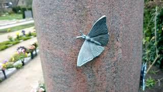Geistliches Wort #64 - Schmetterlinge