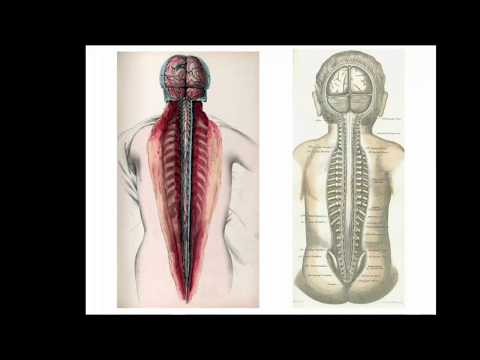 Anatomy of the Spinal Cord - Dr. R. Shane Tubbs